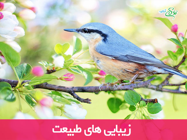 زیبایی های طبیعت