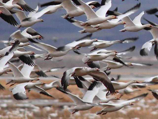 پرواز پرنده ها