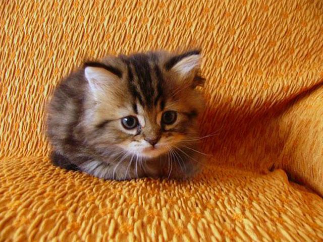 بچه گربه های بانمک