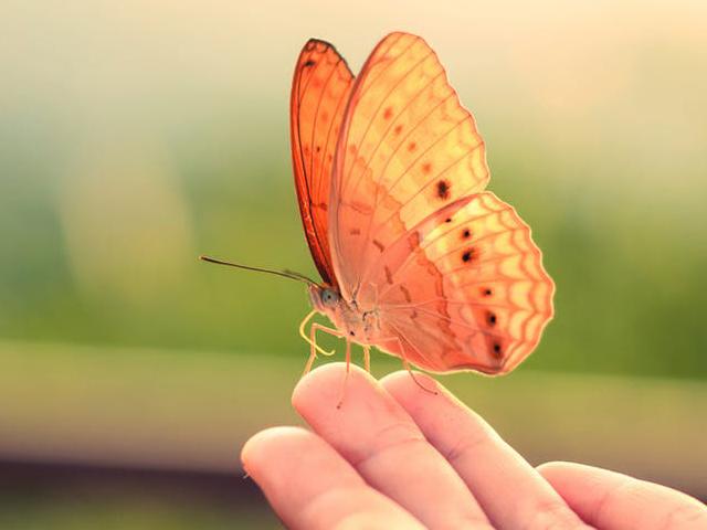 دنیای رنگ ها در بال پروانه