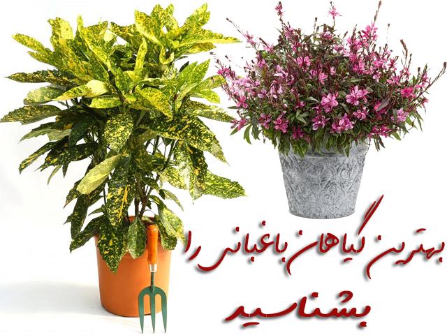 بهترین گیاهان باغبانی را بشناسید