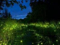 پارک نورانی در چین