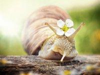 تصاویری زیبا از حلزون