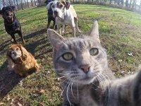 گربه عکاس