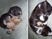 حیوانات خانگی و اسباب بازی آنها