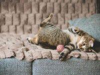 عکس های بامزه از گربه های خانگی