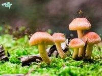 عکاسی از قارچ ها