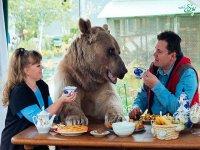 زندگی با یک خرس!
