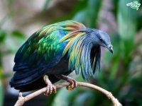 پرهای رنگین کمانی پرندگان