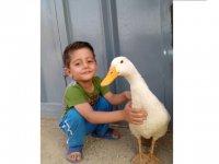 بهداد حسینی