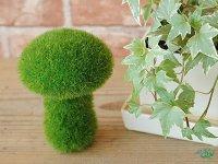 ایده های جالب برای سبزه عید