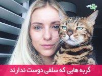 گربه هایی که سلفی دوست ندارند