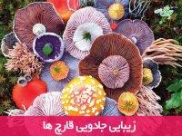 زیبایی جادویی قارچ ها