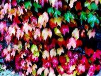 زیبایی های فصل پاییز