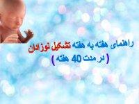 شکیل و رشد نوزادتان