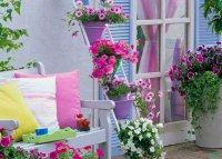 ایده هایی برای گل های خانگی