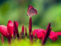 طبیعت زیبا و رنگارنگ