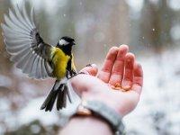 غذا دادن به پرندگان