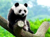 تصاویری زیبا از لبخند حیوانات